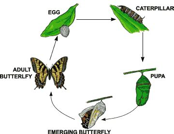 Imaginative And Creative Writing On Butterfly