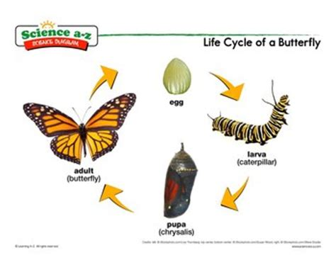 If i were a butterfly essay for class 4